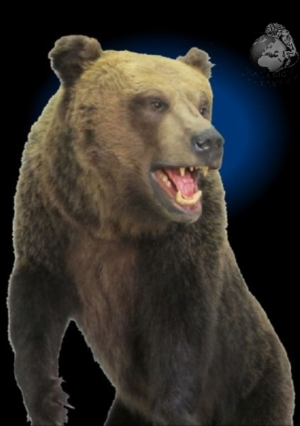 bear_taxidermy_1